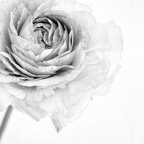 'cœur tendre' by Priska  Wettstein