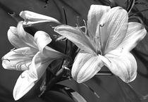 plants of namibia von james smit