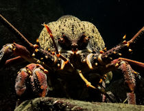 Crayfish von james smit