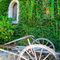 'Winery ivy wall with plow ' von Chris Bidleman