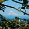 Mt-hood-framed-by-the-garden-8x10