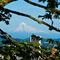 Mt-hood-framed-by-the-garden-8x10