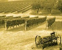 Old time vineyard and plow (sepia) von Chris Bidleman