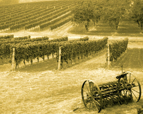 Old-time-vineyard-and-plow-8x10