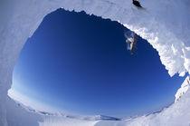 Arctic Snowboarder. von Ross Woodhall