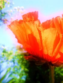 Mohn-Impression by Maria-Anna  Ziehr