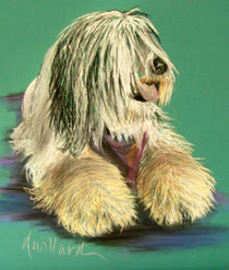 Sheepdog in Pastel von Deborah Willard