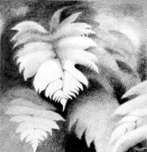 Mamaku Tree Fern Pencil by Patricia Howitt