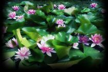 Seerosen rosa im Teich, vignette schwarz von Bea  Gaberthüel