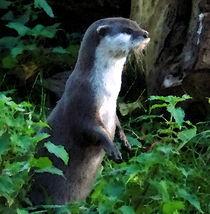 Mother-otter