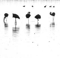 flamingo silhuoette von james smit
