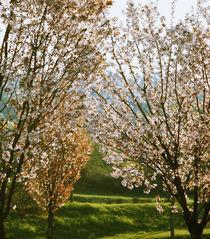 Spring von Arseny Sigarev