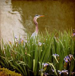 Bird-in-the-water