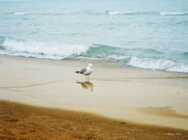 Bird-on-the-beach