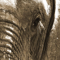 eye of the elephant von james smit