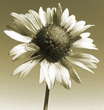 flowers von james smit