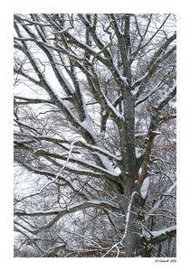 Snow Tree by © CK Caldwell