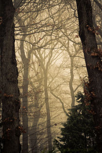 Into the Woods von Alexander Ipfelkofer