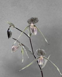 Orchids by Viktor Savchenko