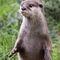 Otter-img-7436