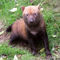 Bush-dog-img-7345-sq