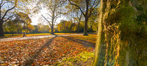 London, Hyde Park in Autumn