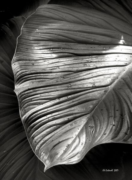 Silvertone-leaf-print