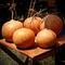 Sunset-pumpkins-print
