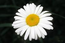 Beautiful Flower by Milena Ilieva