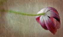 tulip von Ekaterina Samorukova