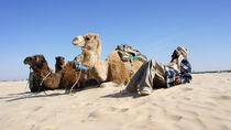 Desert Caravans by Ajdin Durakovic