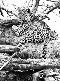 Leopard in tree. Black and white.South Africa von Yolande  van Niekerk