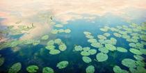 waterlillies home von Priska  Wettstein