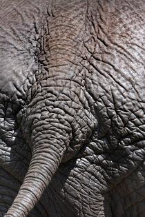 Elefant behind von Martin Kristiansen