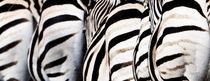 Stripes by Martin Kristiansen