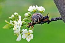 snail von Ekaterina Samorukova