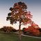 Autumn-beauty