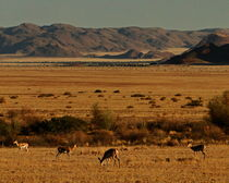 tourism namibia von james smit