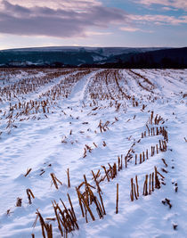 Snow coverd field, Somerset, England.