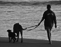 walking the dog by james smit