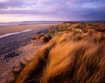 Sand Dunes at Westward Ho!, Devon, England. by Craig Joiner