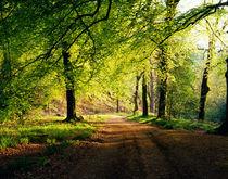 Hore Wood, Dartmoor, England von Craig Joiner