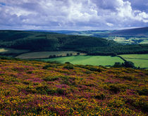Selworthy Beacon, Exmoor, England by Craig Joiner