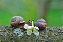 snails kissing von Ekaterina Samorukova