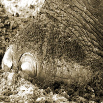 enormous elephant foot by james smit