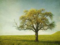 Appletree