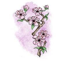Cherry Blossom Water Color by Barondzines Baron Pollak