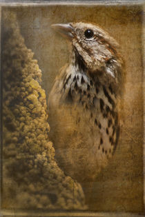 Birds - Sparrow  by Eye in Hand Gallery
