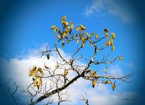 Autumn's Here von Milena Ilieva