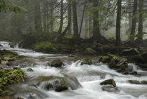 mountain river in Carpathian forest von pasha66
